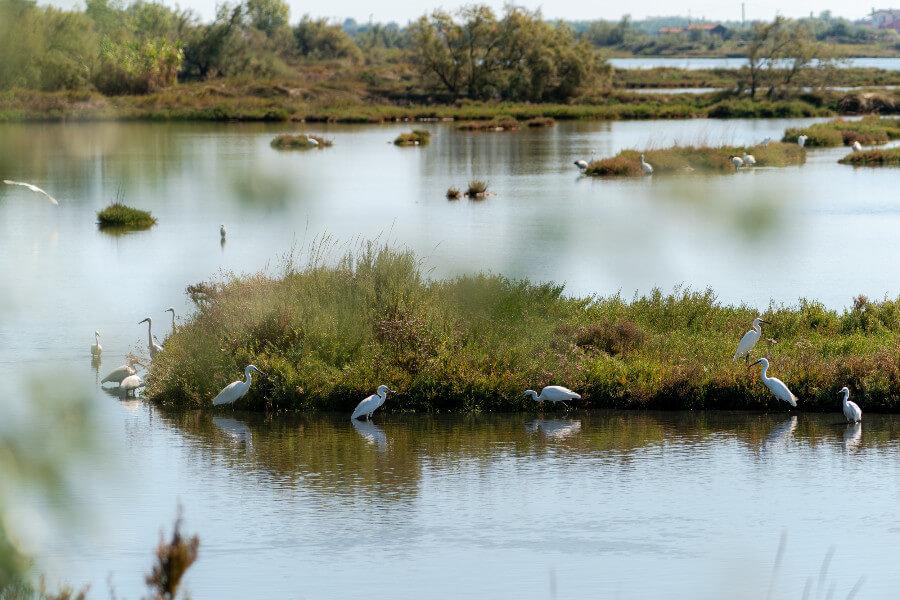 ca-savio-cavallino-treporti-cavallino-laguna-immagine-centrale