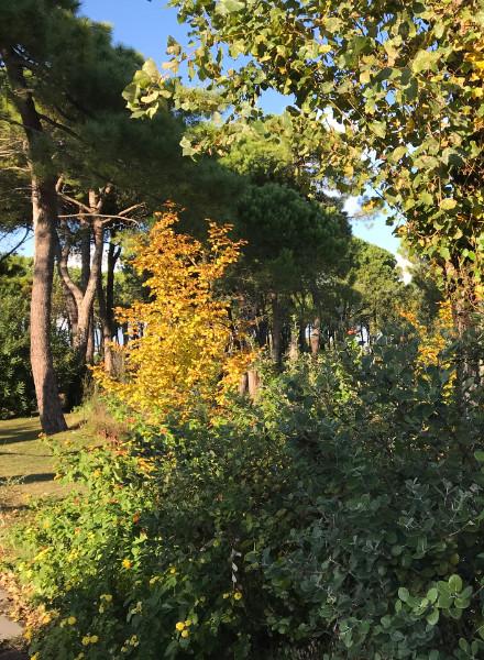 ca-savio-autumn